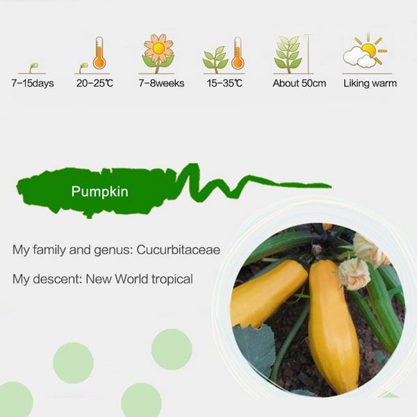 8 Pcs Pumpkin Cucurbita Pepo Seeds Garden Plants